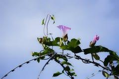 liana sky barbwire flower nature Royalty Free Stock Photo