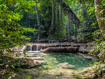 Lianas in the rainforest. Stock Image