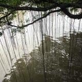 Liane et eau images libres de droits