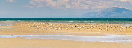Liani ammos Ammouliani at Chalkida in Greece. A beautiful wetland with seagulls. Panoramic view. royalty free stock photography