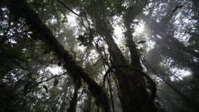 Lians в дождевом лесе видеоматериал