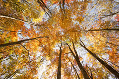Liaoning forest scenery Royalty Free Stock Image