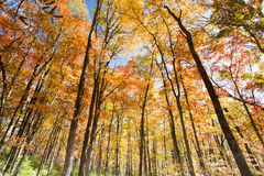 Liaoning forest scenery Stock Photos