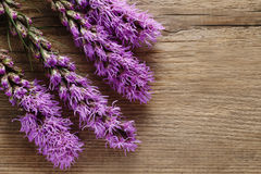 Liatris (blazing star or gayfeather) flowers on wood. En background, copy space royalty free stock photo