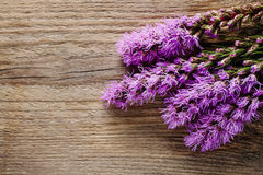 Liatris (blazing star or gayfeather) flowers on wooden backgroun Stock Photography