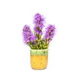 Liatris kwiat, okwitnięcie w ceramicznym kubku Obraz Stock