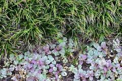 Liatrisgräs och purpurfärgade och gröna växter Arkivfoton