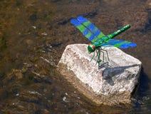 Libélula artificial en una piedra por el río Foto de archivo