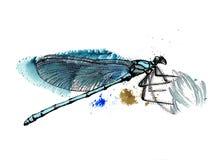 Libélula azul ilustración del vector