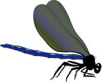 Libélula azul ameaçando ilustração stock