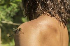 A libélula bonita com danificado a asa senta-se em um ombro t Fotos de Stock