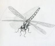 Libélula - bosquejo ilustración del vector