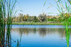 Libélula da grama do lago fotografia de stock royalty free