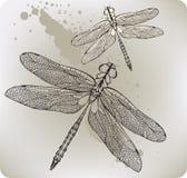 Libélula del vuelo, mano-gráfico. Illustratio del vector Fotos de archivo libres de regalías