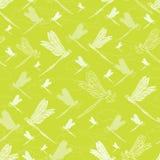 Libélula verde-clara do vetor ilustração royalty free