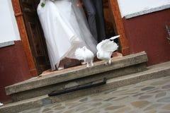 Libérations blanches de colombe Photographie stock libre de droits