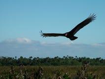 Libérez comme oiseau Photographie stock
