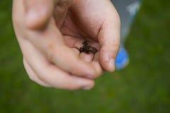 Libérez la grenouille Photographie stock libre de droits
