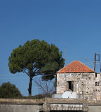 Libanese Huis en Pijnboomboom Royalty-vrije Stock Afbeelding