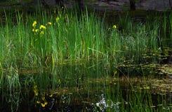 Libbra sulla foresta di fontainebleau Fotografia Stock Libera da Diritti