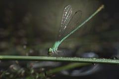 Libel die groene takken vangen stock fotografie