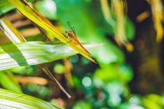 Libel in tropische tuin op een groen blad Royalty-vrije Stock Afbeeldingen