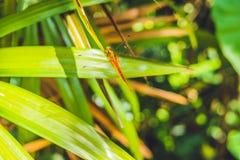 Libel in tropische tuin op een groen blad Stock Foto