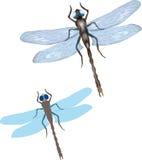 Libelle stock abbildung