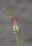 Libelle auf Blume Stockbilder