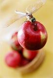 Libelle auf dem Apfel stockfoto