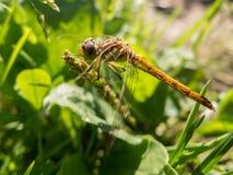 Libelle auf dem Stamm Lizenzfreie Stockfotografie