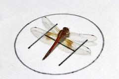 Libelle auf dem symbolischen des Hubschrauberparkens auf dem weißen Hintergrund Lizenzfreies Stockbild