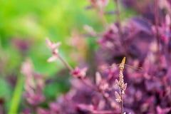 Libelle auf einem Blatt Stockbilder