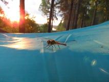 Libelle auf einem touristischen Zelt Lizenzfreie Stockbilder