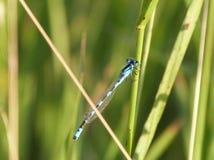 Libelle auf Stamm Stockfoto