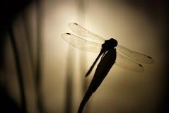 Libelle in der Nacht Lizenzfreie Stockbilder