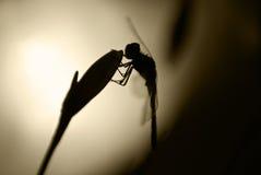 Libelle in der Nacht Lizenzfreies Stockfoto