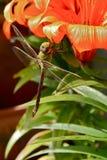 Libelle, die auf Blume stillsteht Stockbild