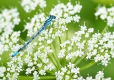 Libelle, die auf dem Stamm der Anlage sitzt stockbilder