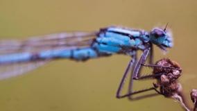 Libelle, die auf eine unbekannte Anlage hält stockfoto