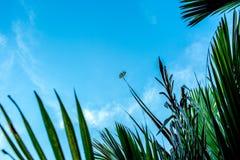 Libelle, die an grünen Urlaub hält Lizenzfreie Stockfotografie