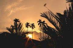 Libelle, die an Niederlassung des Baums mit Sonnenuntergang hält Lizenzfreie Stockfotografie