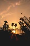 Libelle, die an Niederlassung des Baums mit Sonnenuntergang hält Stockfotografie