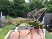 Libelle an Hand lizenzfreie stockfotografie