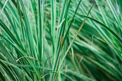 Libelle im Gras Lizenzfreies Stockfoto
