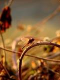 Libelle-Kurven lizenzfreies stockbild