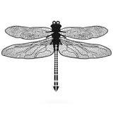 Libelle lokalisierte hohe Qualität Stockfotos
