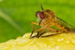 Libelle mit gelber Blume Lizenzfreies Stockbild