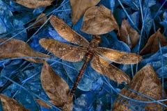 Libelle-Ruheplatz Lizenzfreies Stockbild