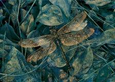 Libelle-Ruheplatz stockfotografie